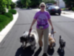 socialization, unsocialized, behaviorist, dog behaviorist, dog training class, mental challenge, fearful, reactive, insecure, shy, dog games, behavior modification, well- behaved, group class, pack walk, heel, dog exercises, tracking, trailing
