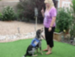 Albuquerque, Service Dog Training, Behavior Rehabilitation, Dog Training, Dog Aggression, Fearfulness, PTSD, Destruction, Veteran, Military, Therapy Dog, Socialization, In- Home Training, Dogs in Weddings, Aggression, Anxiety, Hyperactivity, Barking
