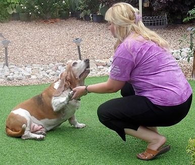Albuquerque, Dog Training, Behavior Modification, Restaurant, Walking in public, socialization, dogs in weddings, Reactive dog issues, special training, tricks, well- behaved dogs, dog training for seniors, in- home, seniors, jumping on guests, leave it