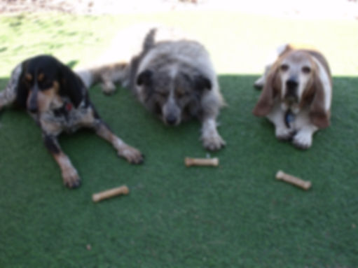 socialization, unsocialized, behaviorist, dog behaviorist, dog training class, mental challenge, fearful, reactive, insecure, shy, dog games, behavior modification, well- behaved, group class, loose leash walking, heel, dog exercises, tracking, trailing