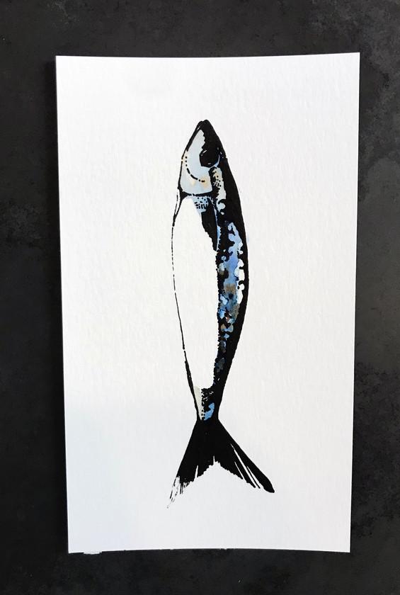 sardine watercolor