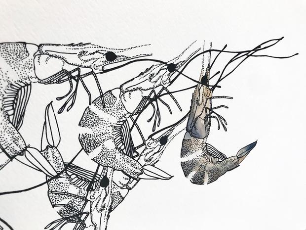 watercolor shrimp print