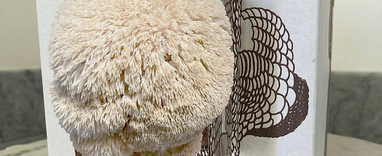 Lion's Mane Mushroom Grow Kit