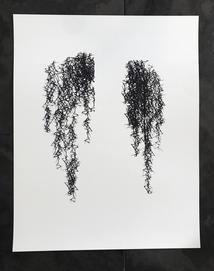 spanish moss print
