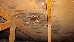 roof leak mold.jpg