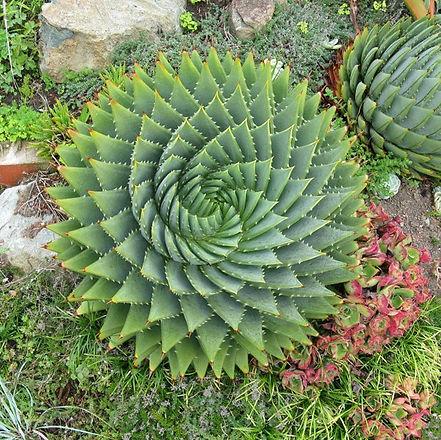 Succulent 4.jpg