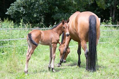 cr-pferde200620-8.jpg