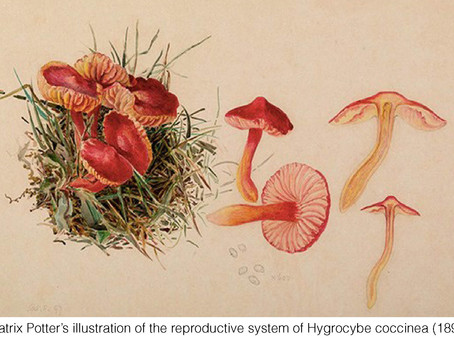 THE REAL DIRT ON: Beatrix Potter's World Beyond Bunnies