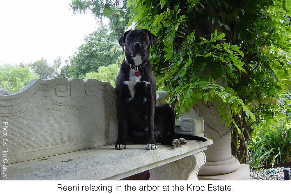 Reeni relaxing in the arbor at the Kroc Estate. Photo by Tim Clancy