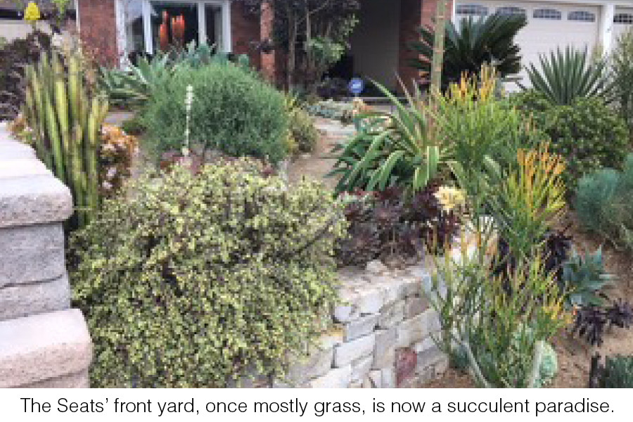 The Seats' front yard, once mostly grass, is now a succulent paradise.