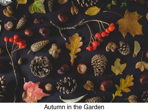NEWS: Washington, D.C. Gardens to Visit this Fall