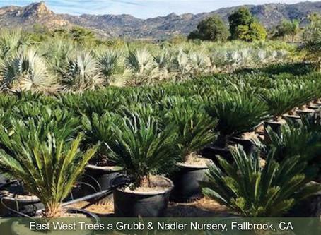 NOVEMBER NURSERY TOUR: East West Trees - Grubb & Nadler Nurseries.
