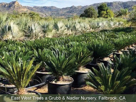 NOVEMBER NURSERY TOUR: East West Trees - Grubb & Nadler Nurseries.
