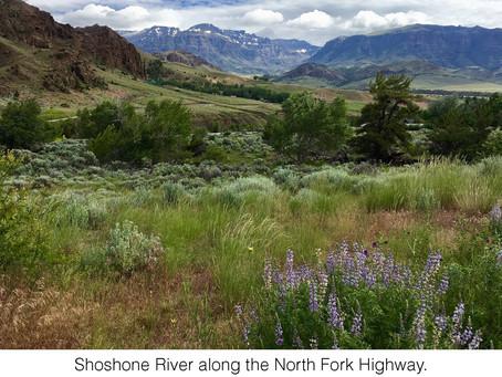 MY LIFE WITH PLANTS: Wyoming's Wonderful Wildflowers