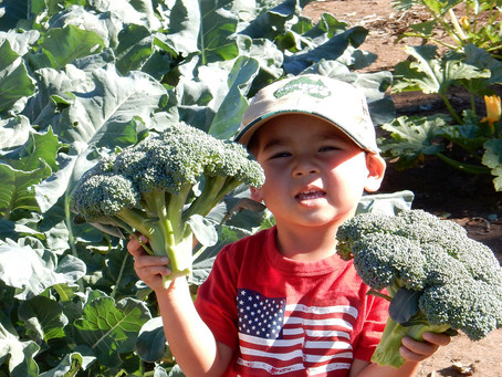 GARDENING WITH CHILDREN: Seed to Table: Intergenerational Gardening at Sunshine Care
