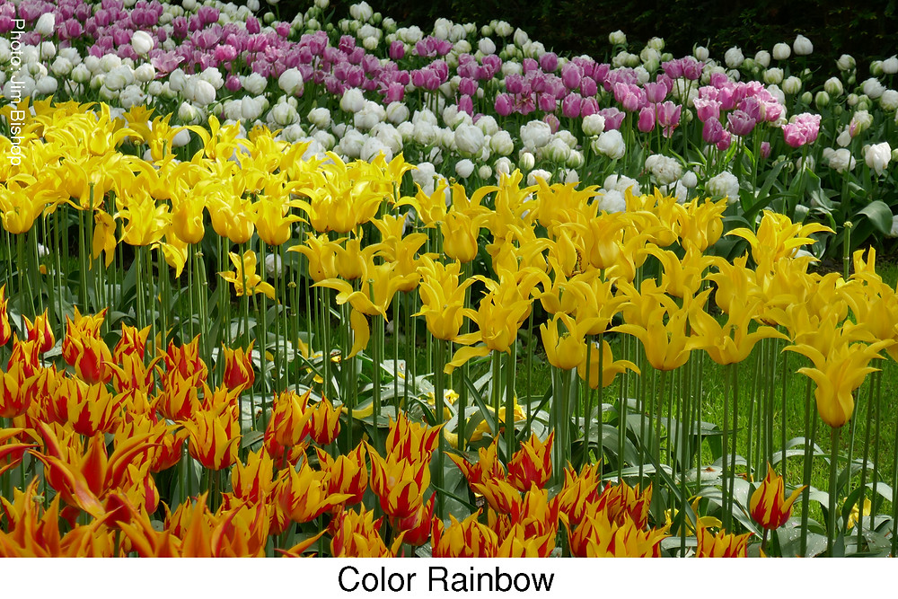 Color Rainbow.  Attribution: Jim Bishop.