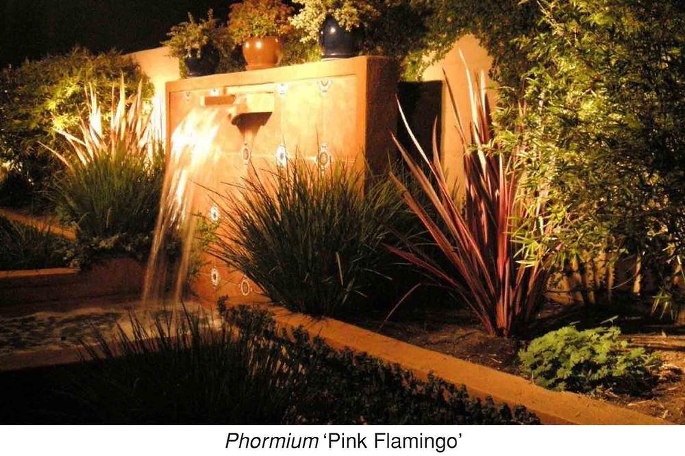 (Rachel Italicize phormium) Phormium 'Pink Flamingo.'