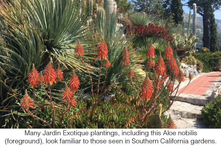 My Life With Plants Jardin Exotique D Eze Sdhs Newsletter