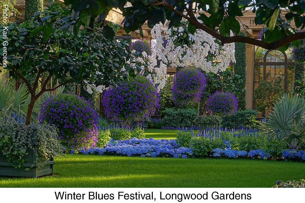 Winter Blues Festival, Longwood Gardens. Photo credit Karl Gercens