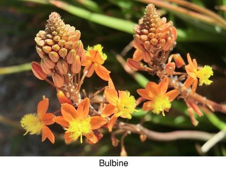 GUEST COLUMNIST: The Marvels of Medicinal Herbs