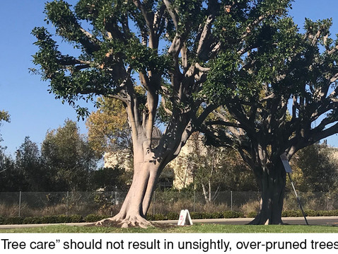 TREES, PLEASE: Tree Pruning: Who's Watching the Hen House?
