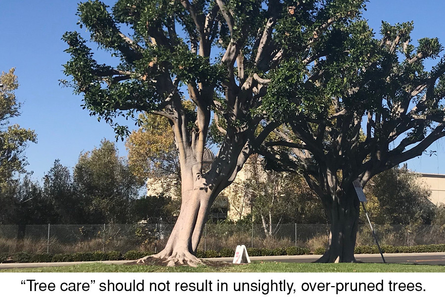 """""""Tree care"""" should not result in unsightly, over-pruned trees."""