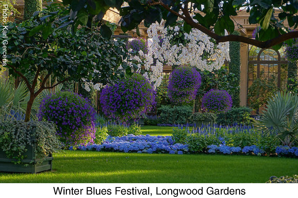 Winter Blues at Longwood Gardens.