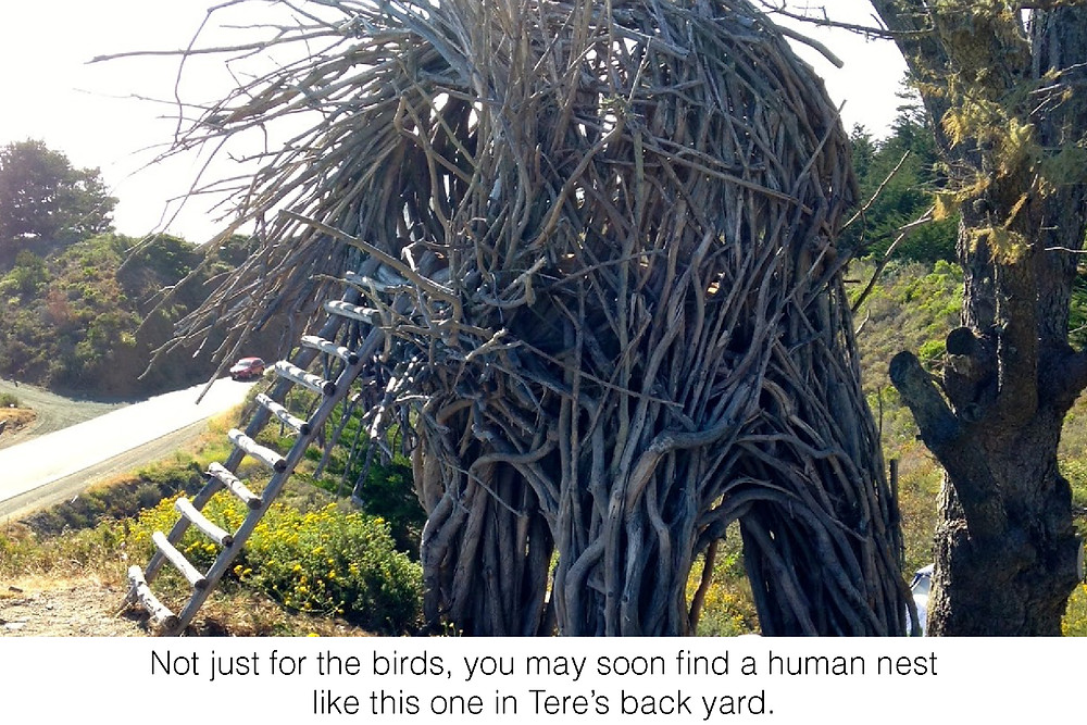Not just for the birds, you may soon find a human nest like this one in Tere's back yard.