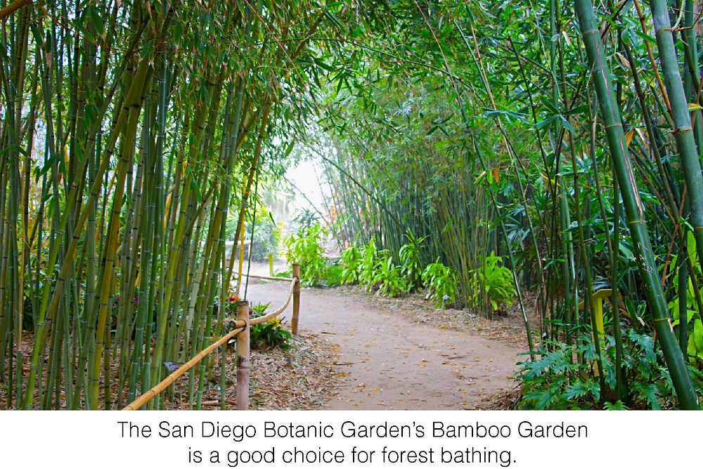 The San Diego Botanic Garden's Bamboo Garden is a good choice for forest bathing.