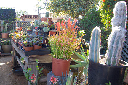 Plant Shopping: Our Favorite Haunts