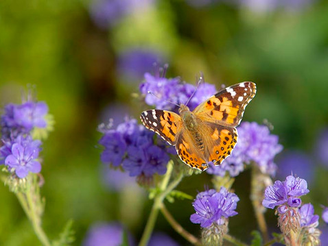 NEWS: Super Bloom Photo Essay