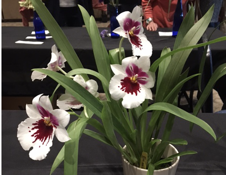 PLANT OF THE MONTH: May 2017 Plant Display