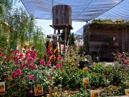 NEWS: SDHS Wins Ten Awards For 2017 Garden Exhibit