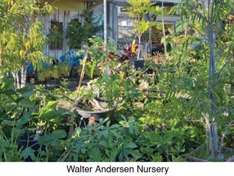SHARING SECRETS: Plant Shopping: Our Favorite Haunts (Part Two)