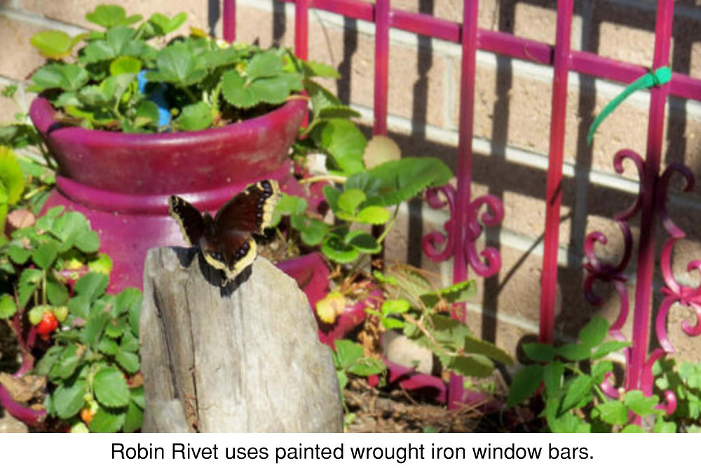 Robin Rivet uses painted wrought iron window bars.