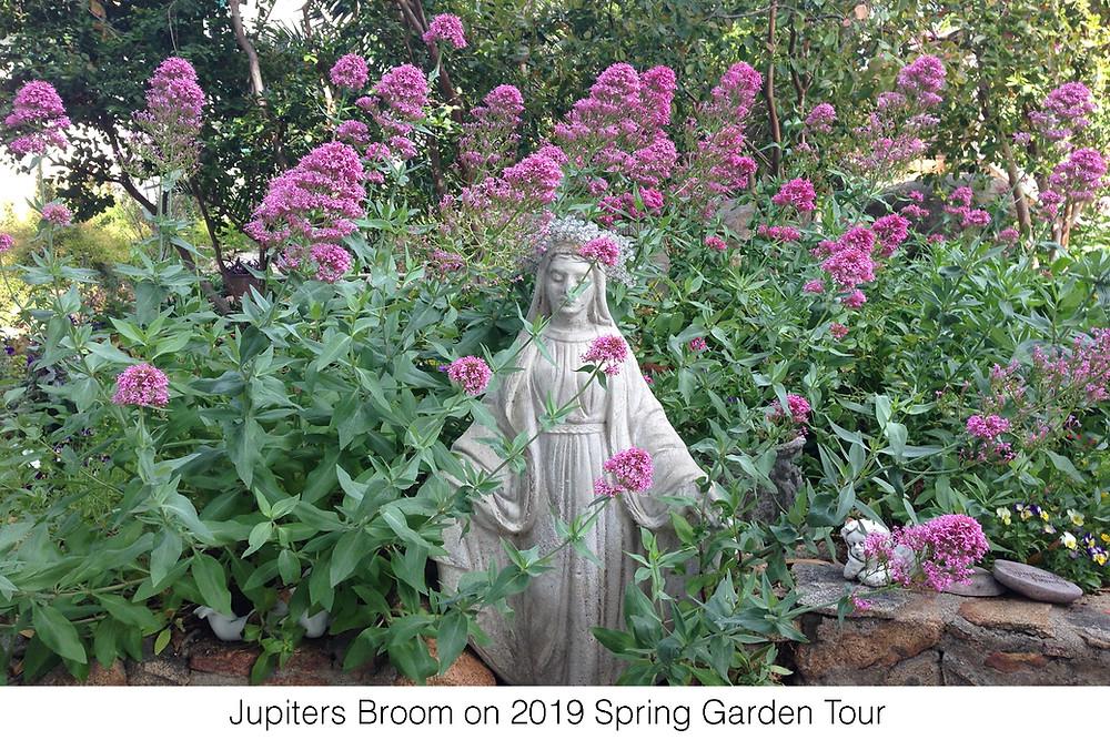Jupiters Broom on 2019 Spring Garden Tour