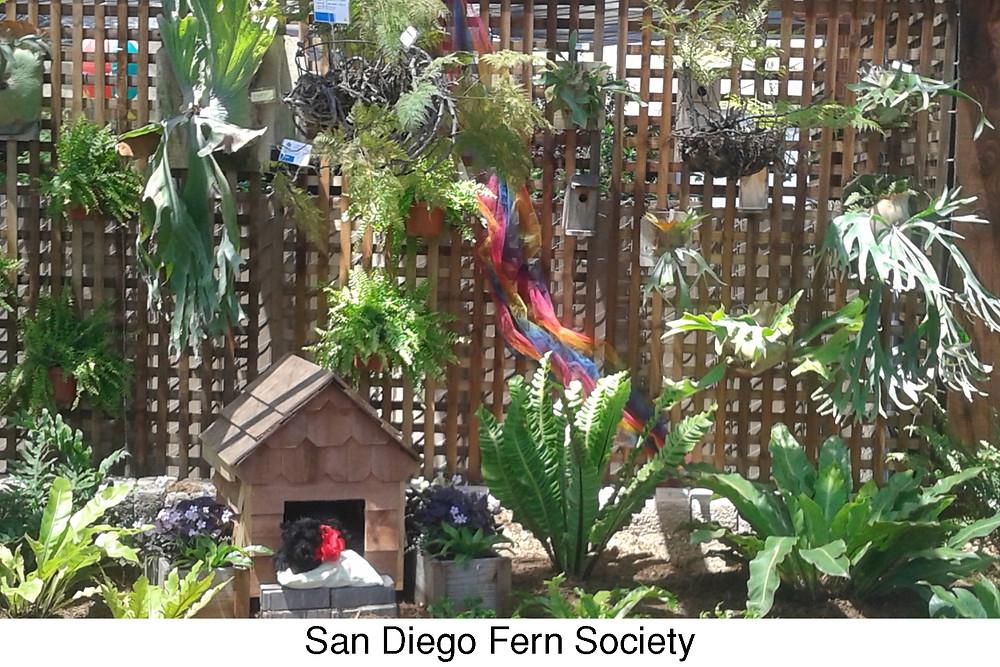 San Diego Fern Society