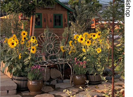 NEWS: A Perfect Score for SDHS Garden Exhibit