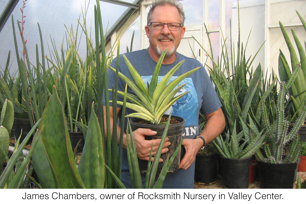 James Chambers, owner of Rocksmith Nursery in Valley Center.