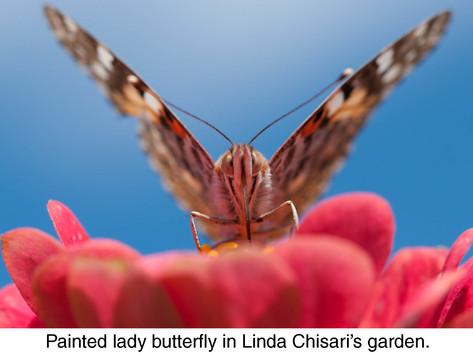 SHARING SECRETS: Welcoming Wildlife to the Garden