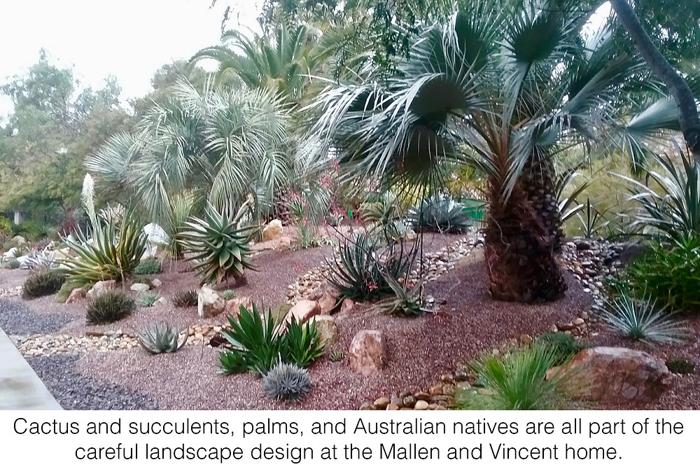Cactus and succulents, palms, and Australian natives are all part of the careful landscape design at the Mallen and Vincent home.