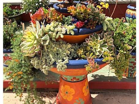 NEWS: Sweet Succulents for the Fair Garden Show