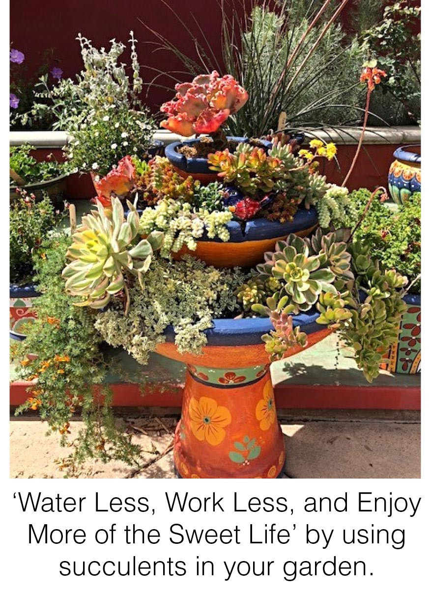 'Water Less, Work Less, and Enjoy More of the Sweet Life' by using succulents in your garden.