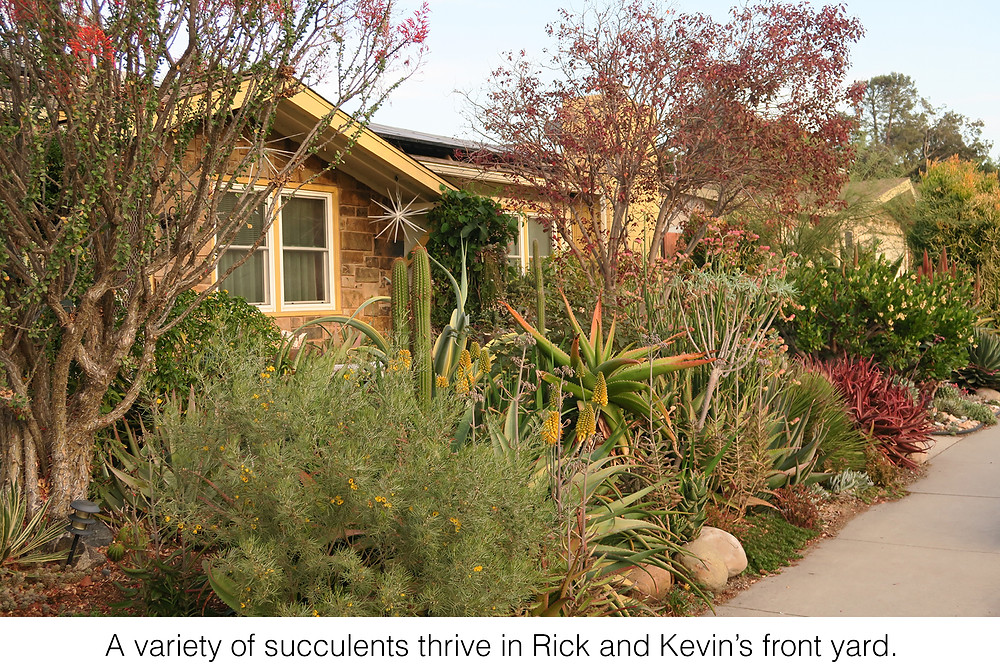 A variety of succulents thrive in Rick and Kevin's front yard.