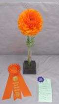NEWS: 2019 Vista Garden Club Flower Show