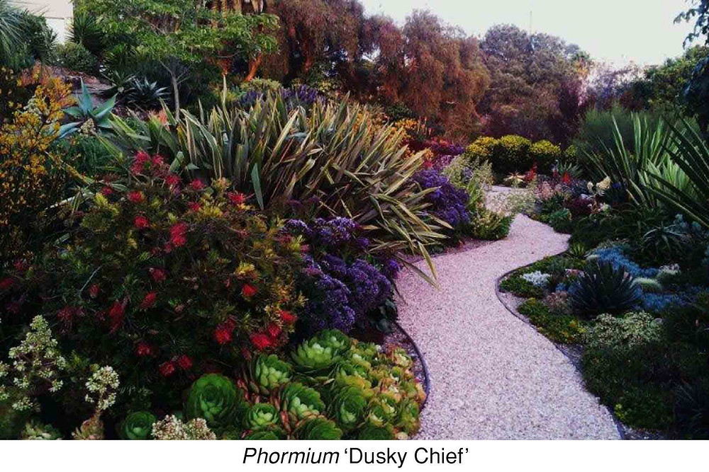 Phormium 'Dusky Chief.'