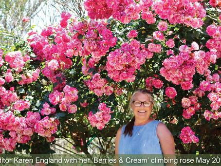 EDITOR'S LETTER: December Roses.