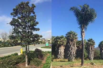 TREES, PLEASE: Tree Pruning Standards