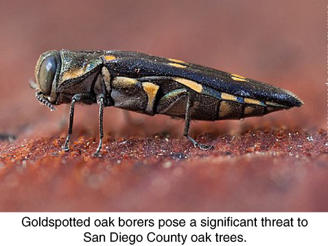 NEWS:  Invasive Tree Pests Workshop