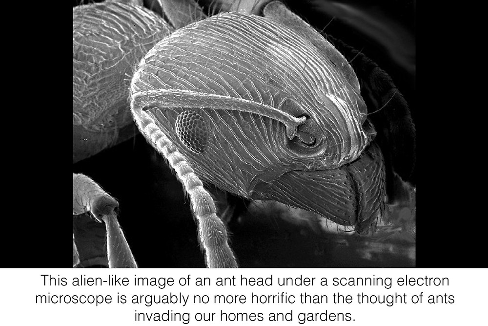This alien-like image of an ant head under a scanning electron microscope is arguably no more horrific than the thought of ants invading our homes and gardens.